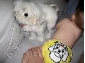 Puppy Applique Custom Cloth Diaper